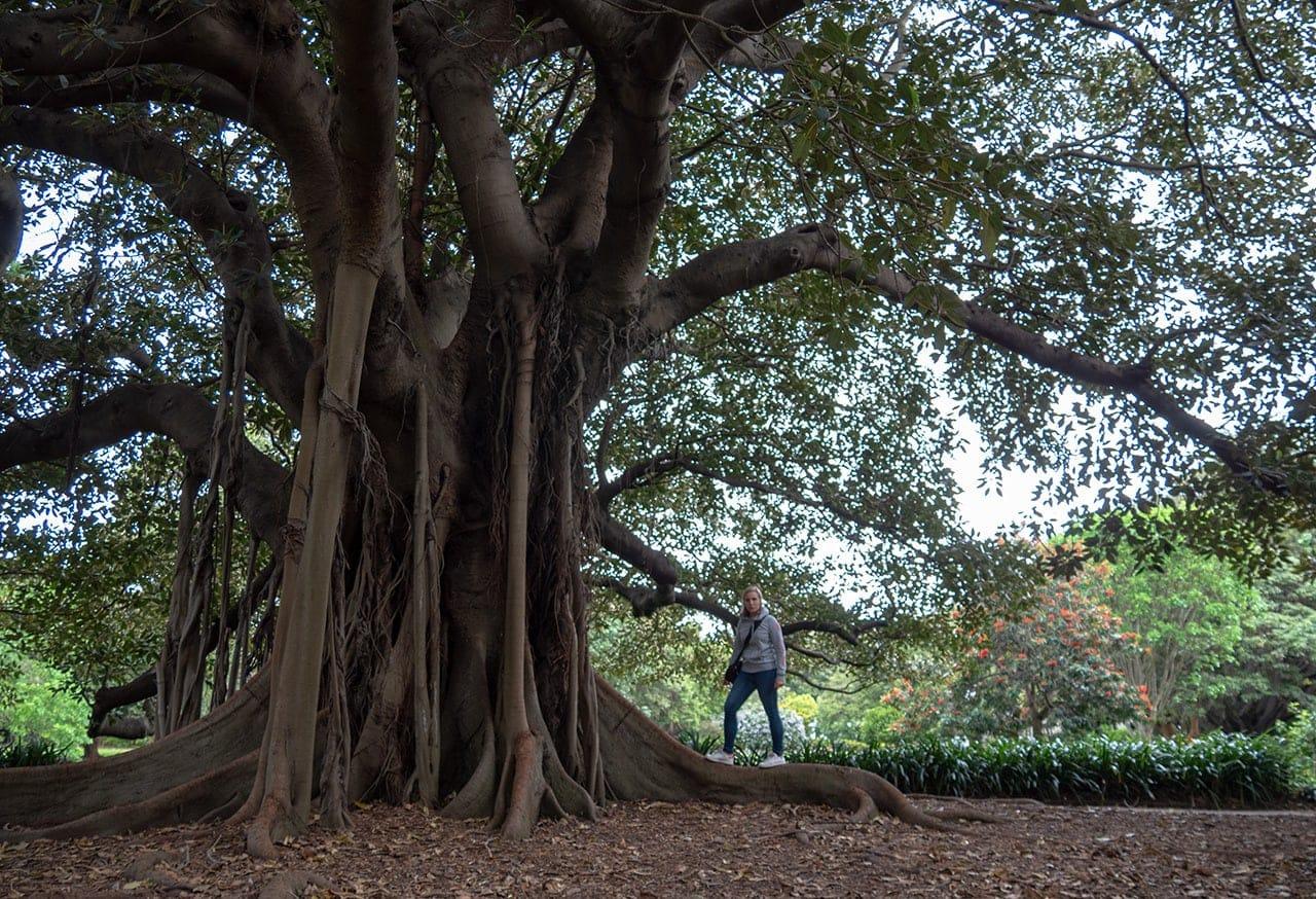 Botanical garden, oasis de verdure à Sydney 3
