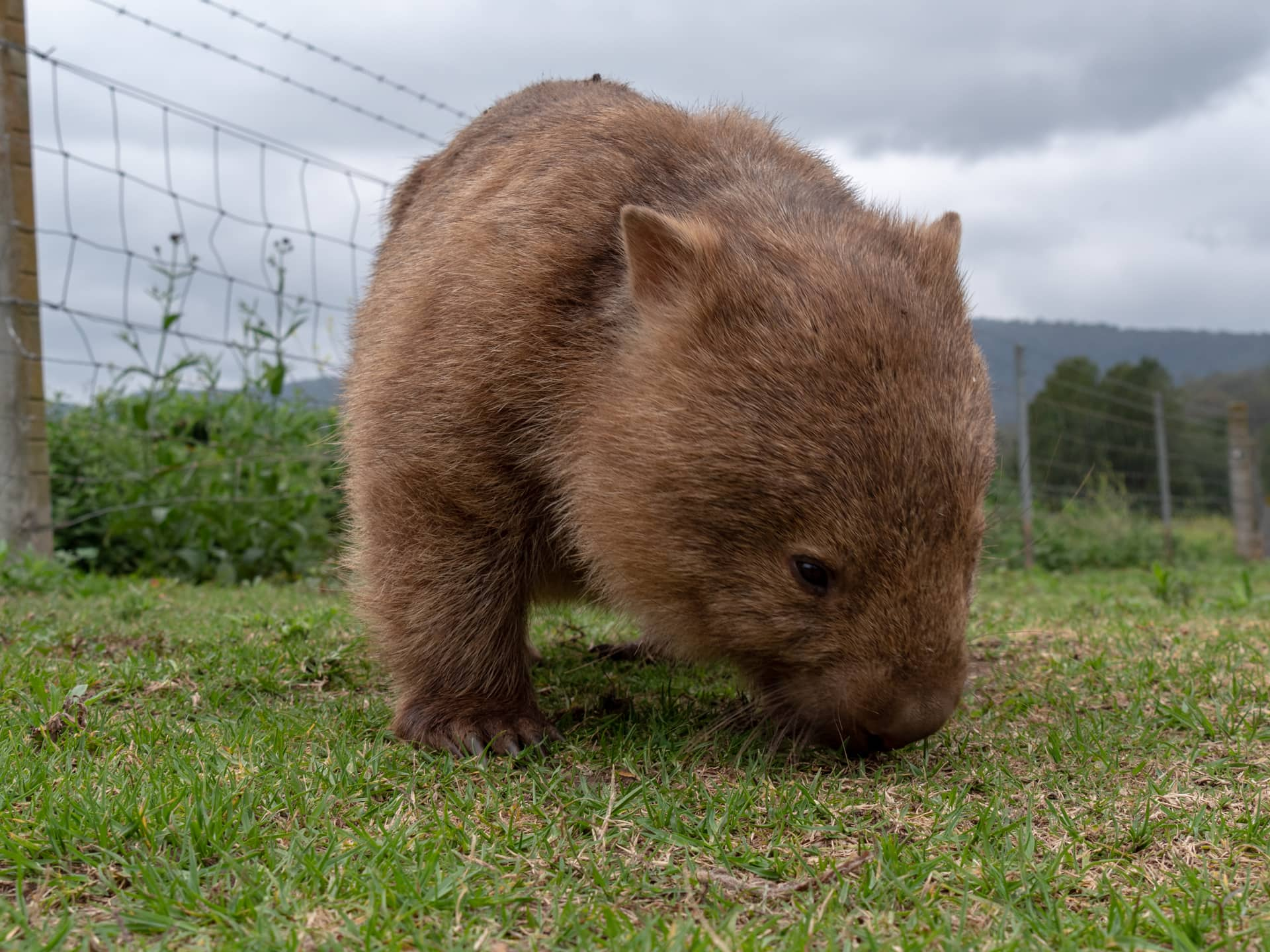 A la recherche du wombat à Kangaroo Valley ! 9
