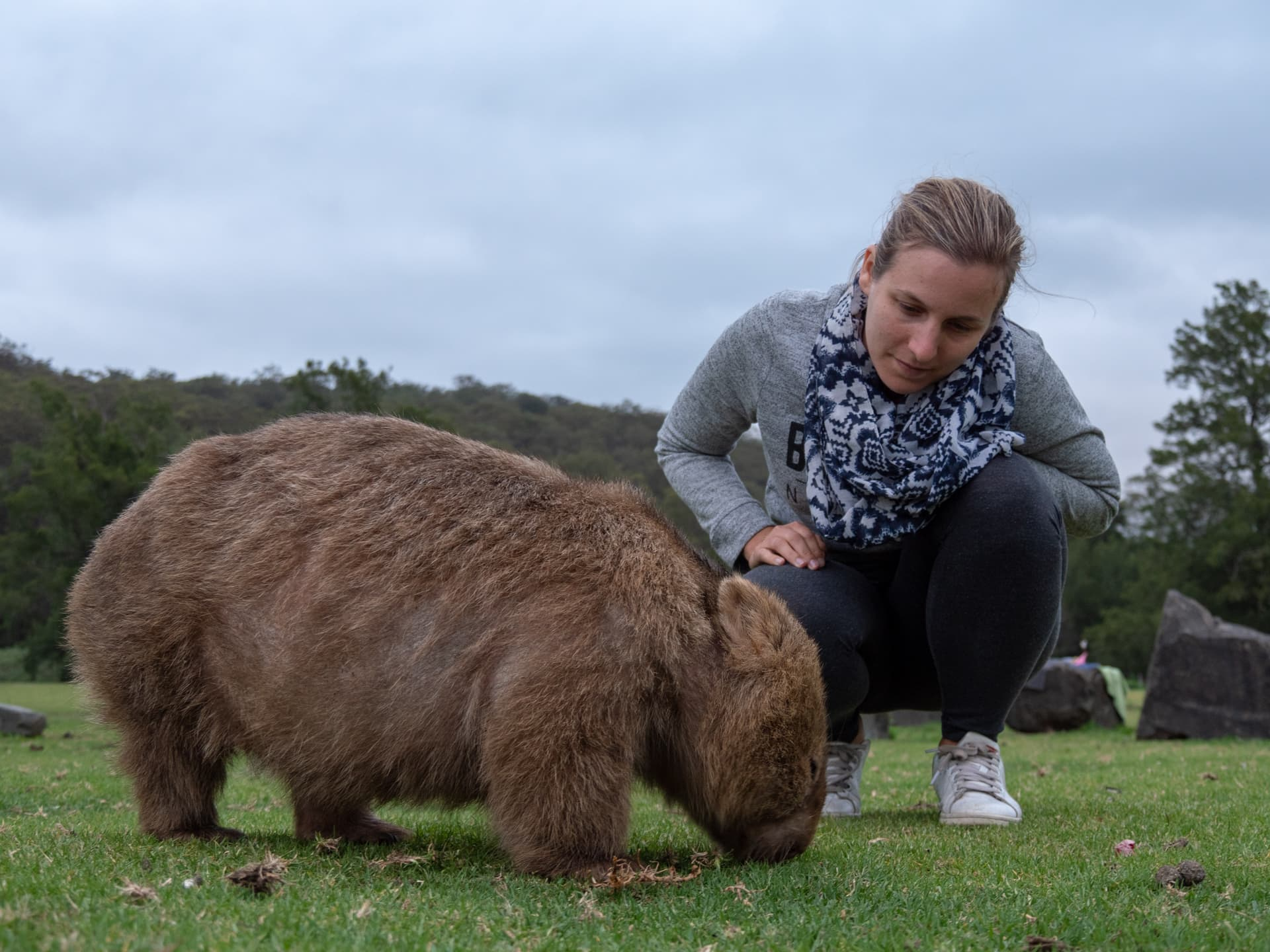 A la recherche du wombat à Kangaroo Valley ! 7