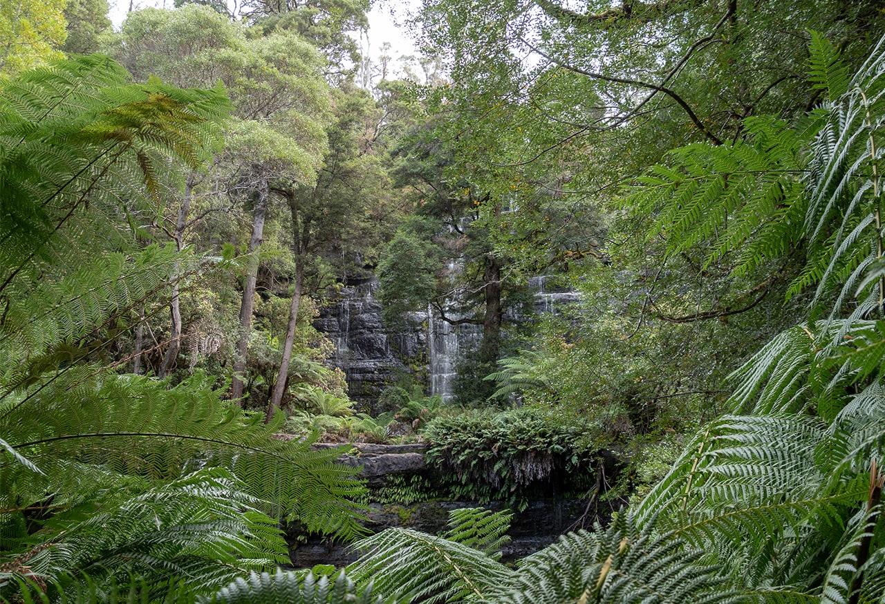 Les cascades et géants gum tree de Mt Field National Park 3