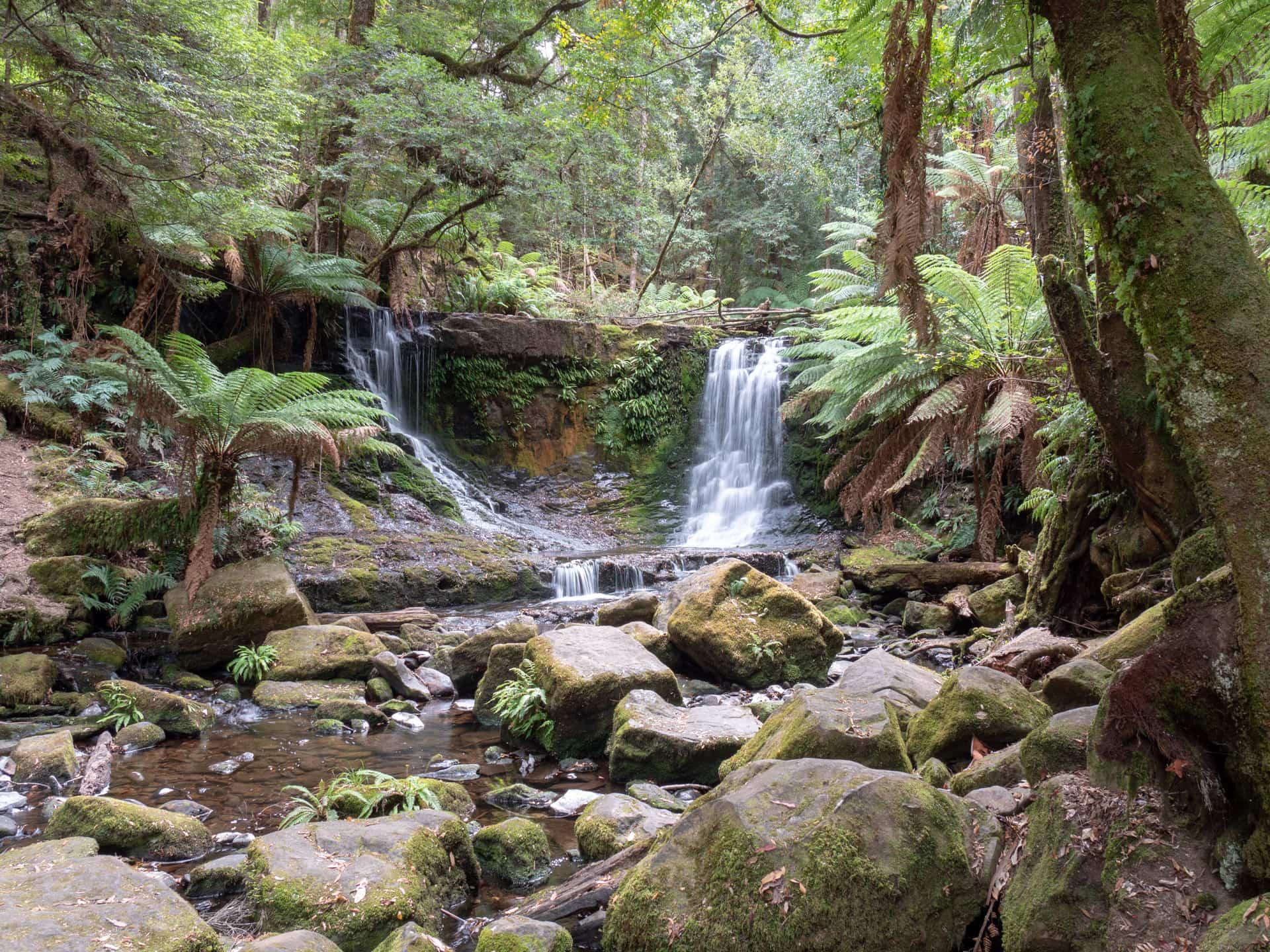 Les cascades et géants gum tree de Mt Field National Park 4